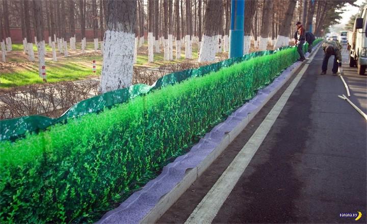 Решение проблемы зелени в больших городах