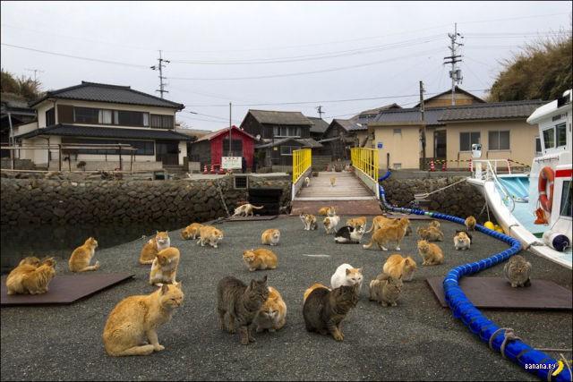 Много фотографий с острова котов