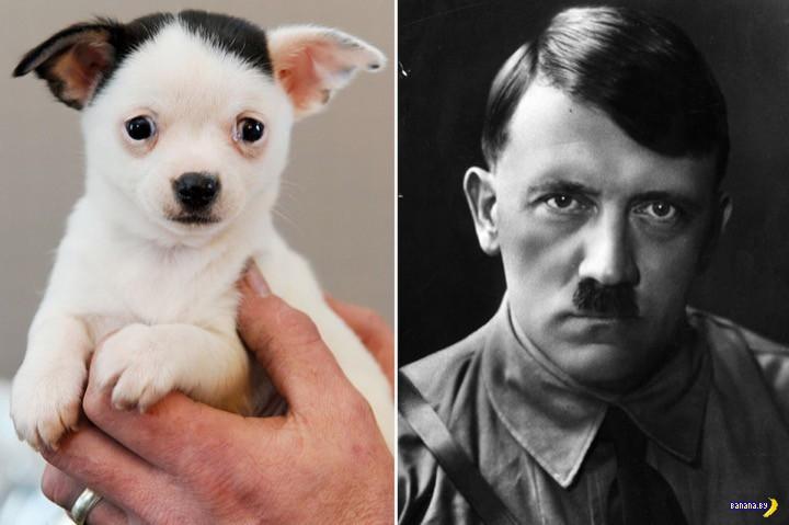 Очередной Гитлер с хвостом