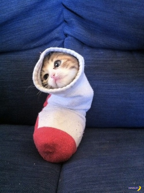 Застрявшие коты