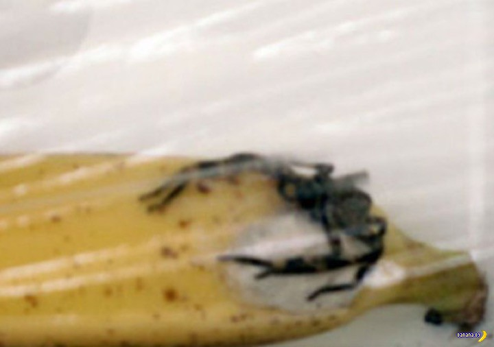 Плюсы и минусы пауков в бананах