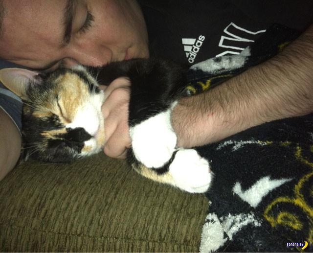 Трогательные коты