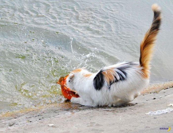 Как кот себе обед поймал