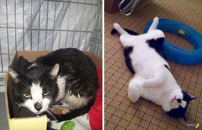 Истории котов
