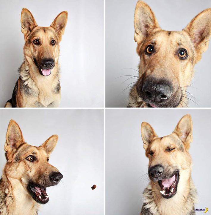 Фотобудка для собак
