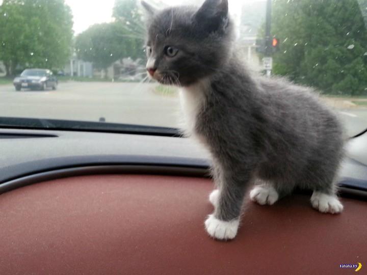 Я еду домой!