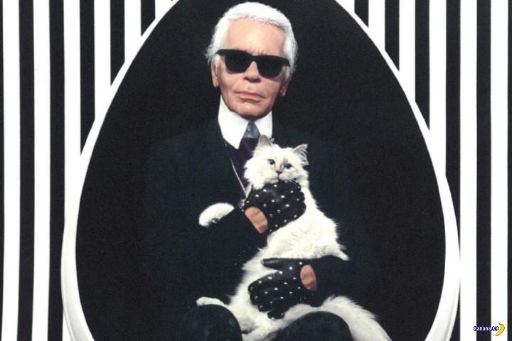 Кошка-модель заработала 3 миллиона евро, а ты –нет!