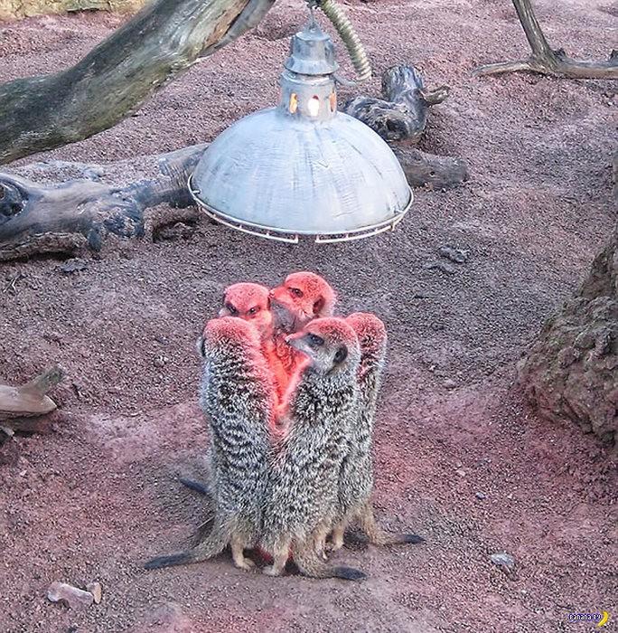 Охотники за теплом