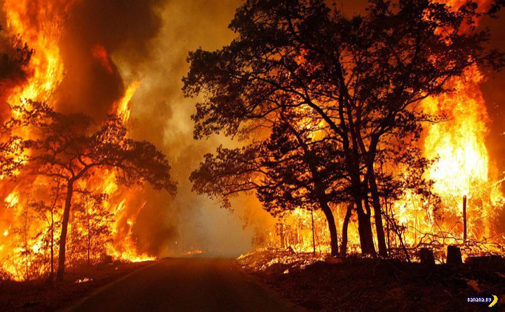 Как выжить во время лесного пожара?