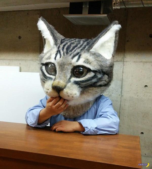Голова котика