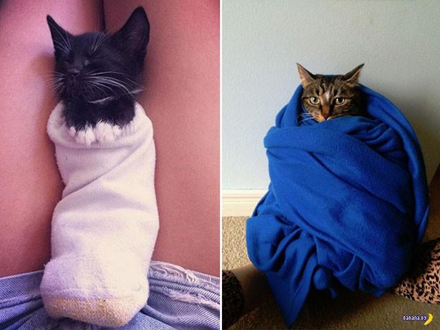 Шаурма с котиками