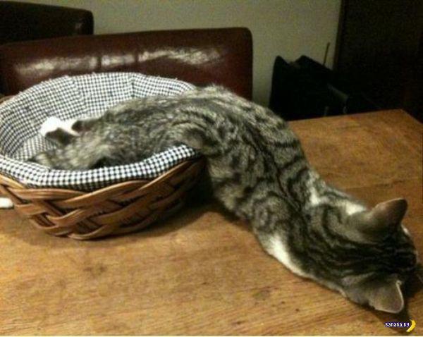 Доказано: коты – это жидкость!