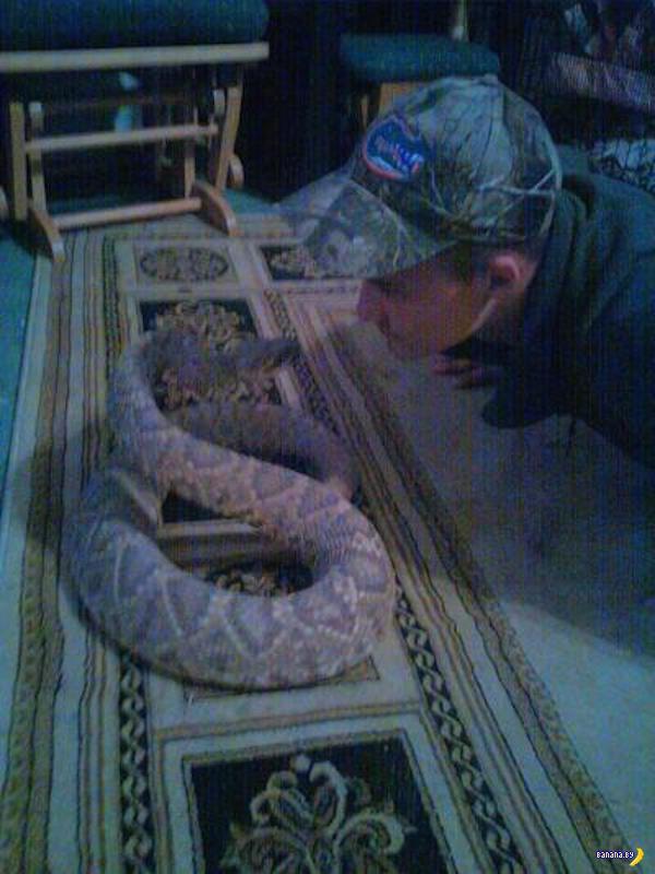 Почему не стоит целовать змей