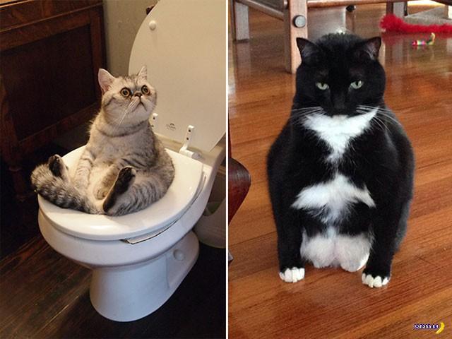 Коты, которые умеют сидеть как люди!