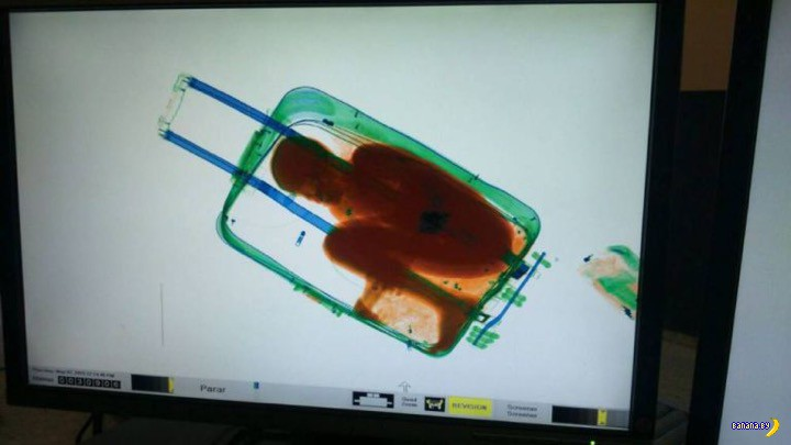 Пацан в багаже