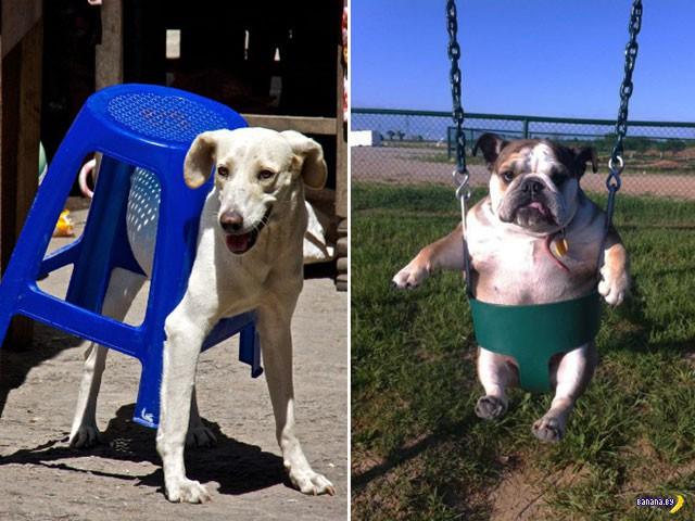 Истории собачьих неудач