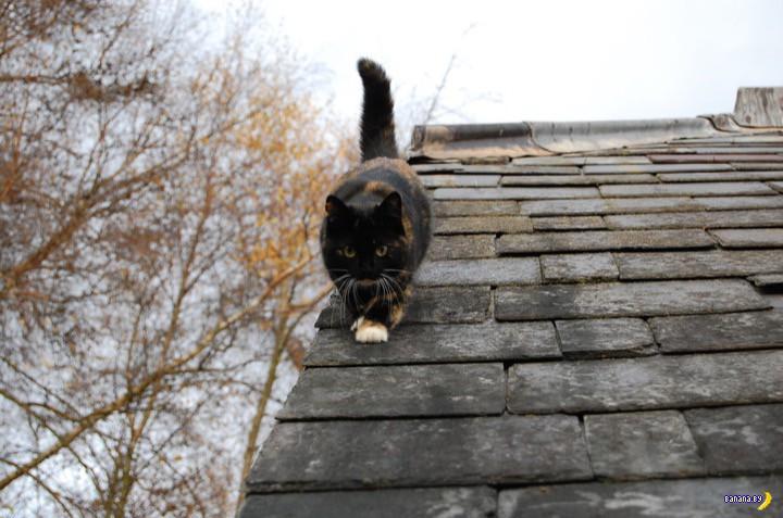 Почему коты не разбиваются падая с большой высоты?