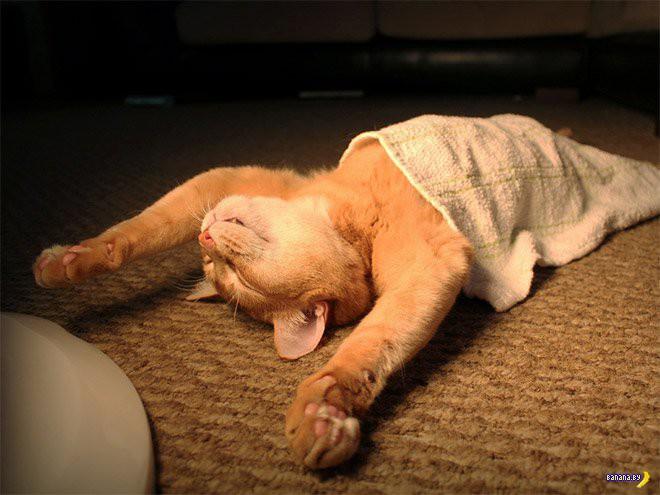 Уставшие коты