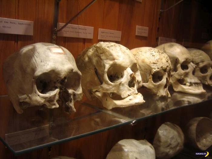 комиссия после музей медицинской истории мюттера филадельфия так давно
