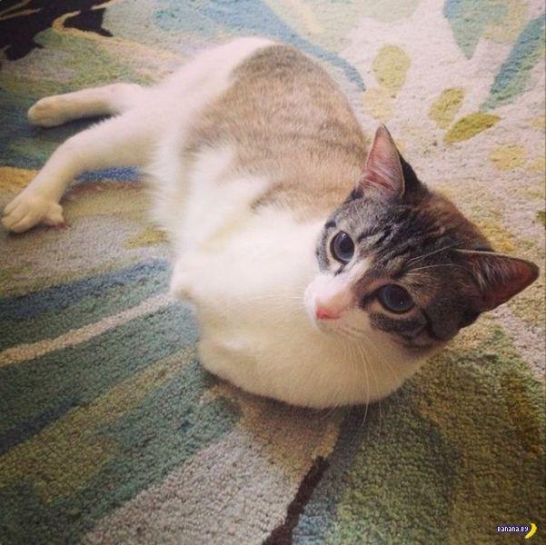 Кот по кличке Ру