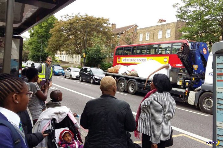 По Лондону Ти-Рекса возили