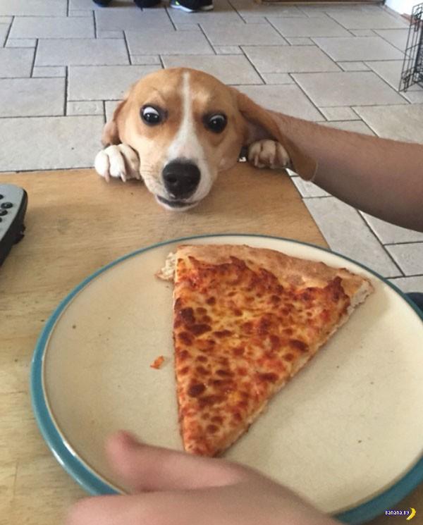Созерцание еды
