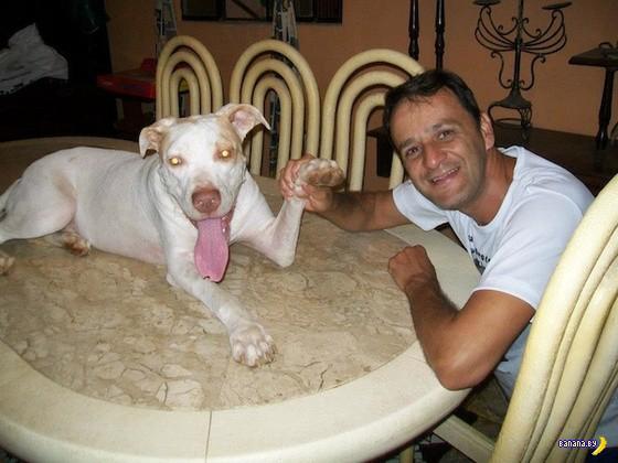 Хорошая история одного пса