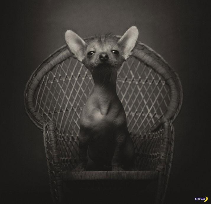 Полные драматизма портреты животных