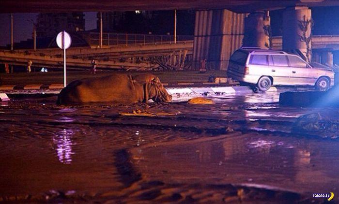 Наводнение в Тбилиси и зоопарк