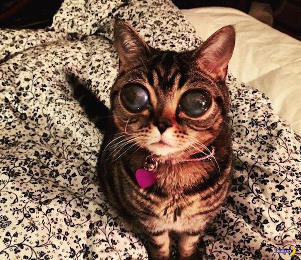 Глаза Матильды