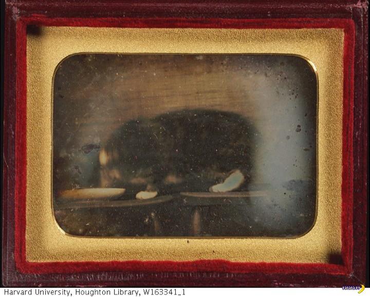 Фото дня - первая фотография кота в мире