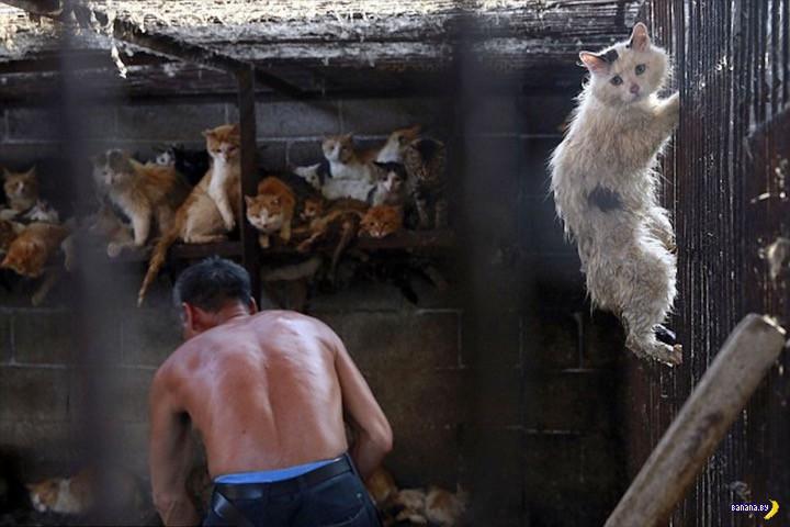 Спасение котейки