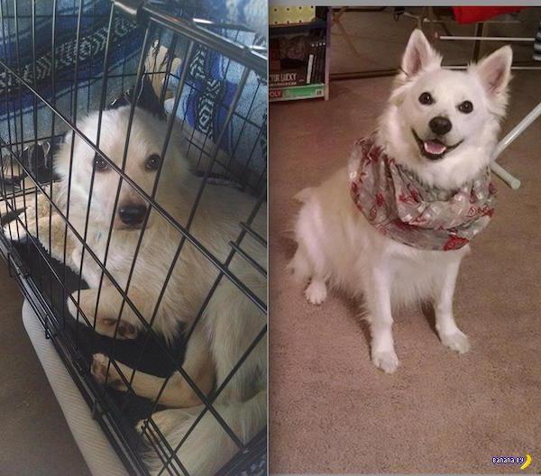 До приюта и после