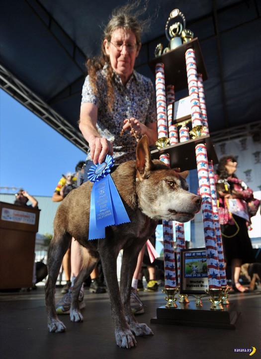 Конкурс уродливых собак прошел в Калифорнии
