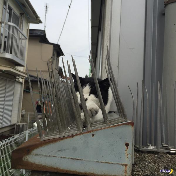 Страшные фотографии с котом на шипах