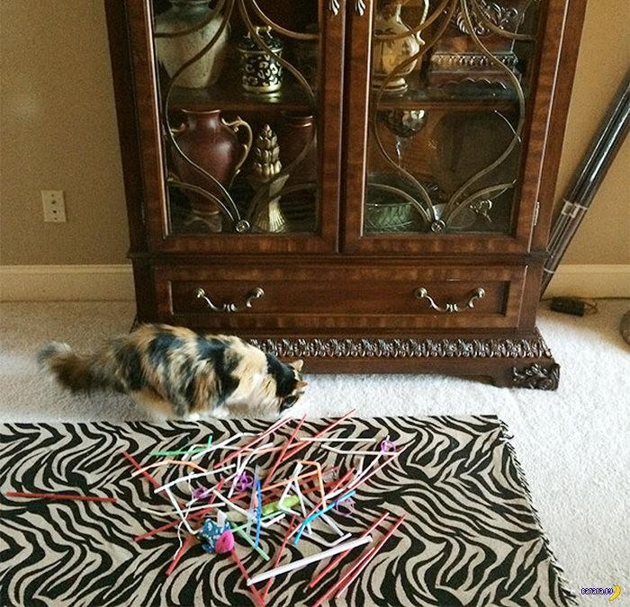 Если отодвинуть диван в доме, где живёт кот