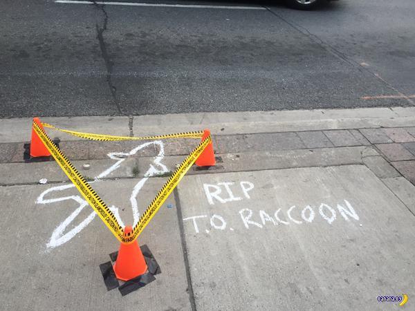 Смерть енота в Торонто