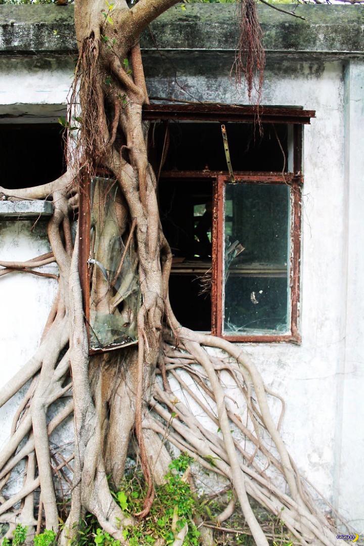Красота корней