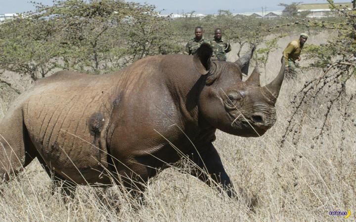 Ученые собирают деньги на защиту черного носорога