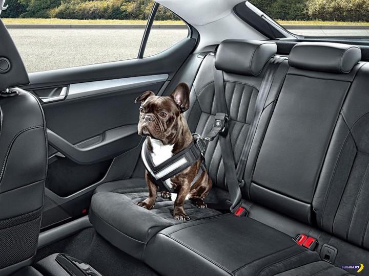 Ремни безопасности для собак тоже нужны!