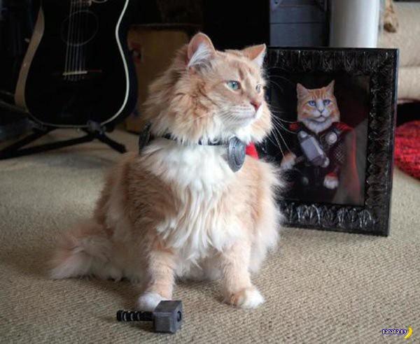 Коты исполняют косплей