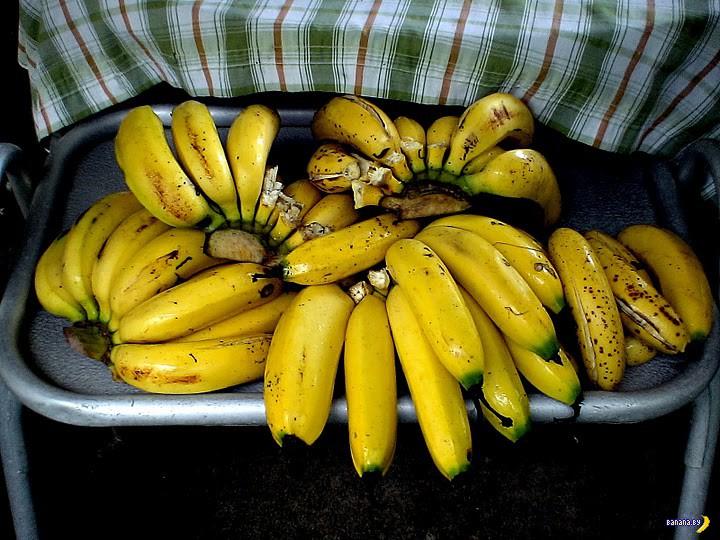 Бананы в опасности