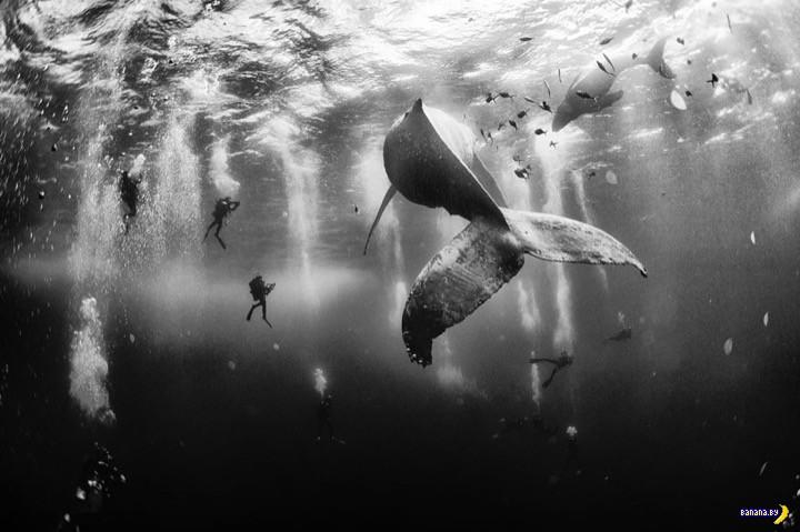 Победители фотоконкурса журнала National Geographic Traveler
