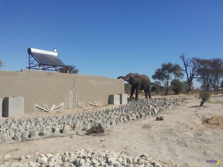 Водопой для слонов