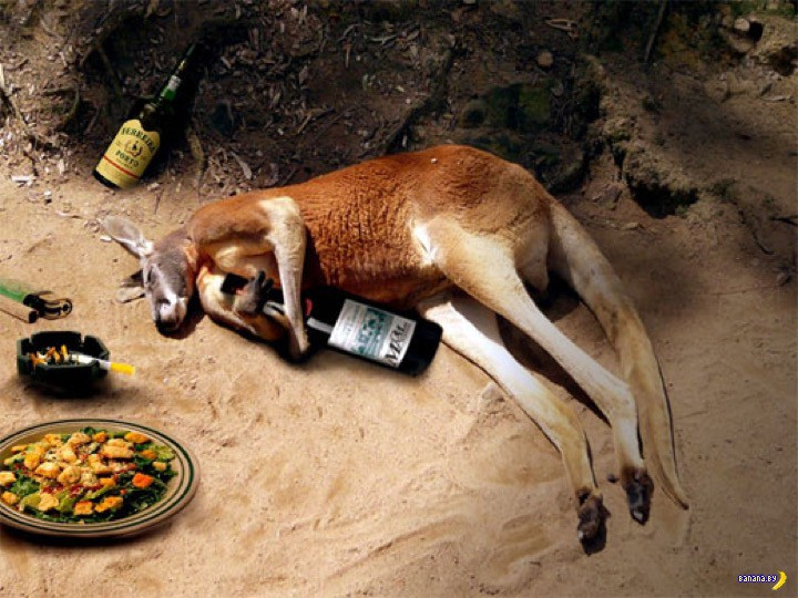 Про австралийское похмелье и экономику страны
