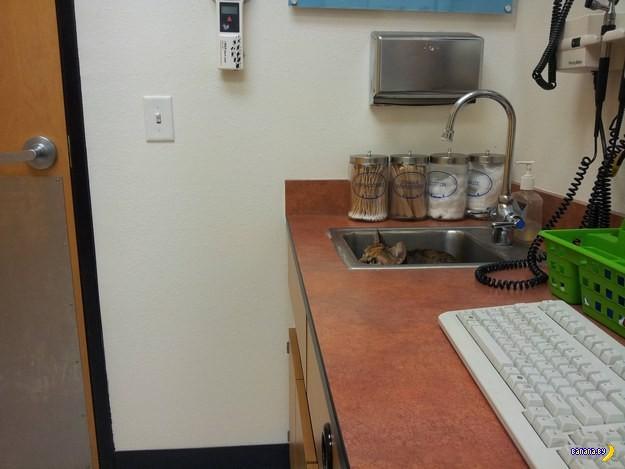 Коты прячутся на приёме у ветеринара