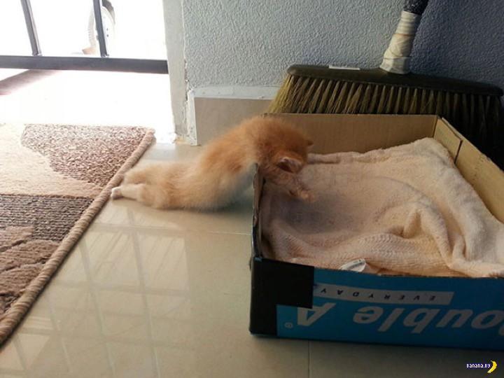Кот = лень