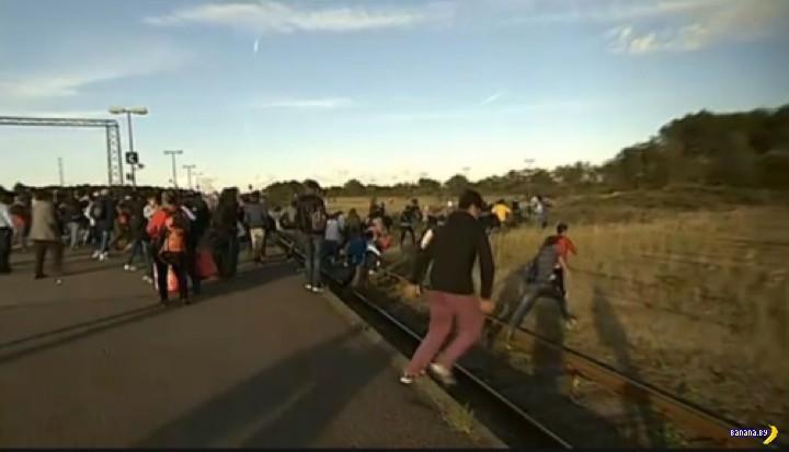 Иммигранты бегут из Дании в Швецию!