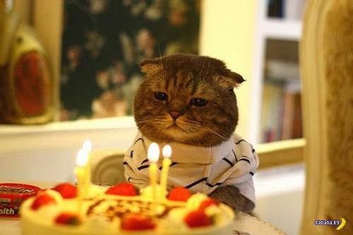 Зверский позитив - дни рождения!