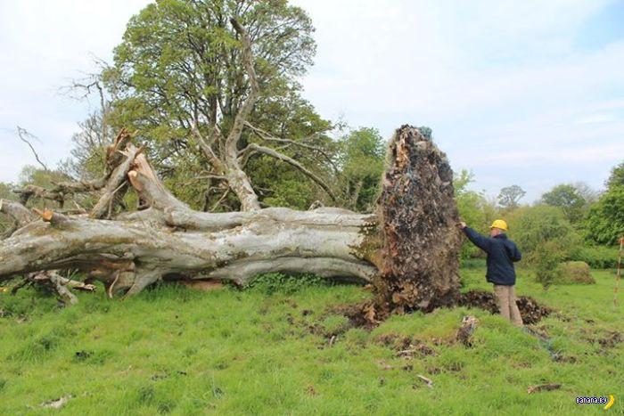 Находка под корнями упавшего дерева